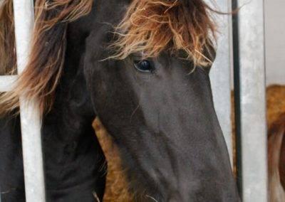 paarden 374