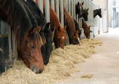 paarden 391