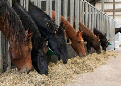 paarden 394